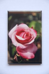 Magnet Rose 44x68mm