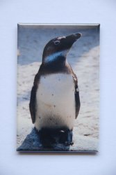 Magnet Pinguin 44x68mm